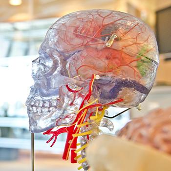 Psychology vs. Neuroscience?
